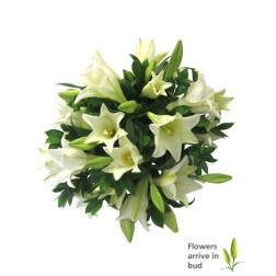 Lovely Lily Special