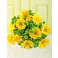Yellow Gerbera Daisies & Green Sprays Bouquet