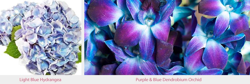Blue Hydrangea & Blue & Purple Dendrobium Orchid Wedding Flowers