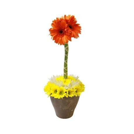 Gerbera & Daisy Topiary Tree
