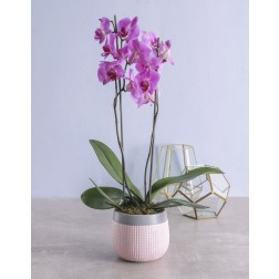 Mothers Day Orchid in Pottery Pot
