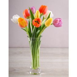 Tulip Temptation