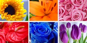 Choosing the Right Colour Flowers for Your Wedding