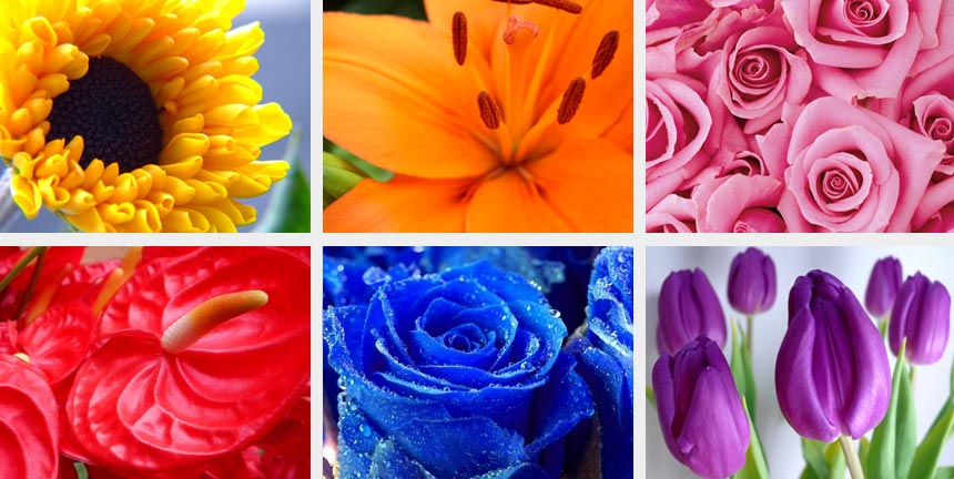 Choosing The Right Colour Flowers For Your Wedding Inmotion Flowers